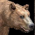 Black bear male blonde v1