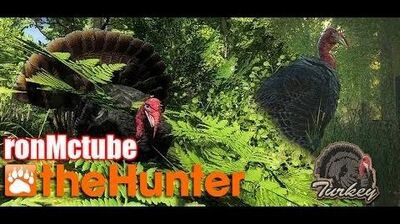 The Hunter Turkey Hunting 2014 with ronMctube
