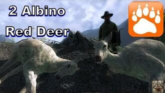 2 Albino Red Deer Cows! theHunter 2016