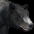 Black bear male glacier v1