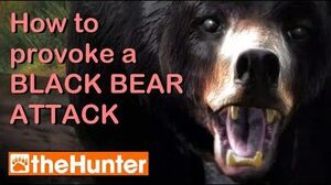 TheHunter Provoking a Bear Attack