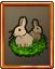 Rabbit field