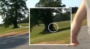 File:Hoodyleaningontree.jpg