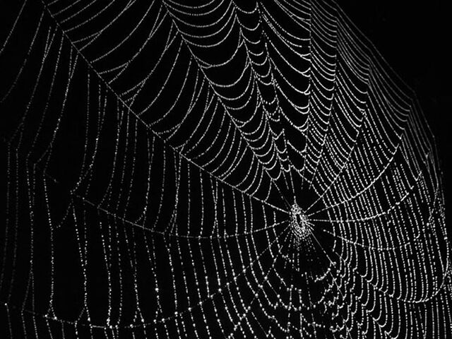 File:Spider-web.jpg
