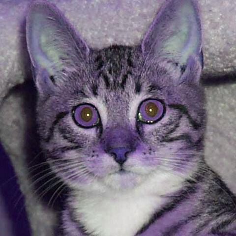 File:Purple cat.jpg