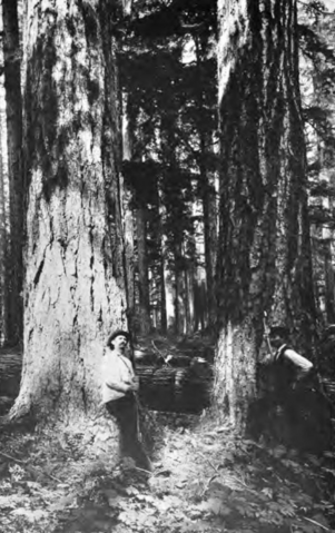 File:Old Growth forest in Oregon Coast Range.png