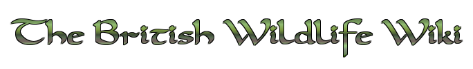 THEWWC