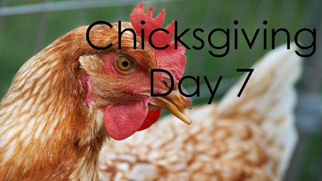 File:ChicksgivingDay7.jpg