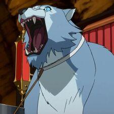 Jumbo-cat