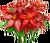 Decoration 1x1 Fire Poinsettias