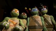 Turtles confused
