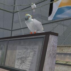 Animal Cockatoo