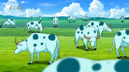 Soda Water Buffalo Pack Eps 64