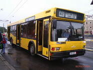 Constanta MAZ yellow bus