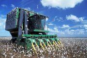 Baumwoll-Erntemaschine auf Feld