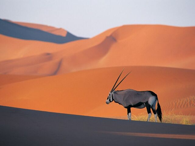 File:Antilop-resimleri.jpg