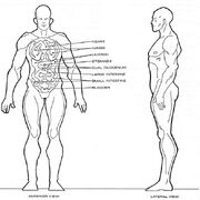 Klinzai physiology