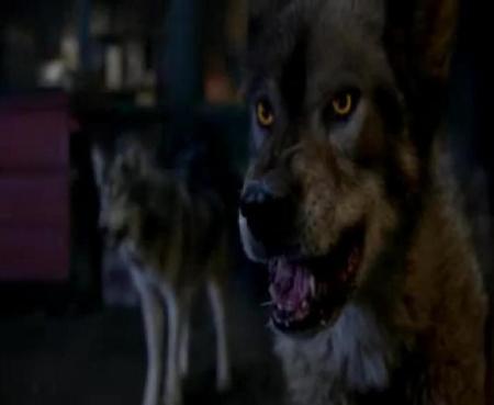 File:Anotherwolf.JPG