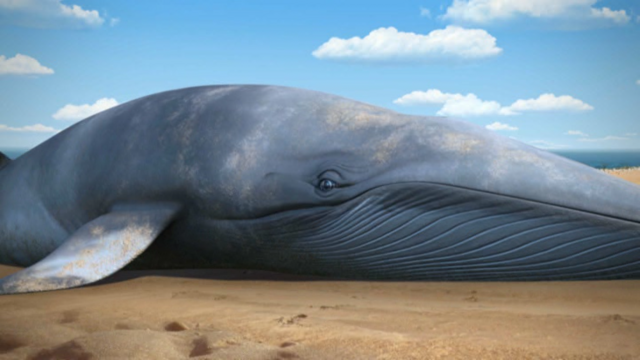 File:ToadandtheWhale19.png