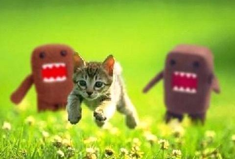 File:RUN KITTEN, RUN!!!.jpg