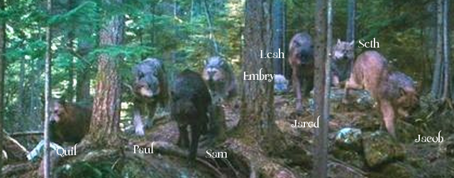 File:Allwolfpack1.png