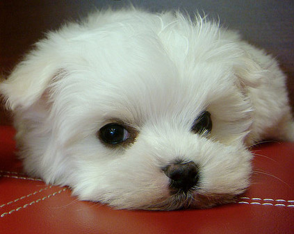File:Cute-puppy.jpg