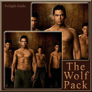 11-the-wolf-pack