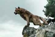 File:Werewolf jake.jpg