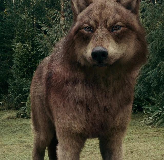 File:Eclipse 14 wolf jake 2.png
