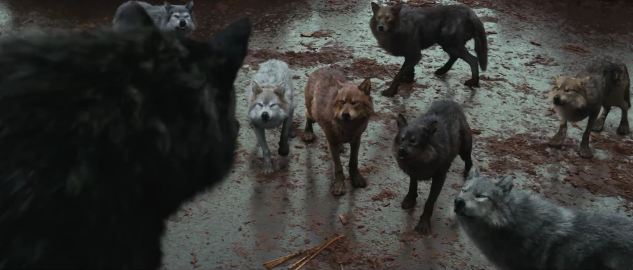 The pack before they p...