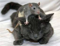 File:Mouse and cat.jpg