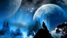 Wolf-howling-wallpaper