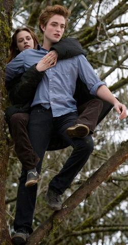 File:Edward Tree.jpg