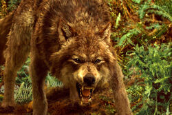 Newmoonwolf