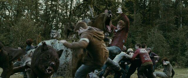 File:Twilight-saga-eclipse-werewolves-attack-newborn-vampires.jpg