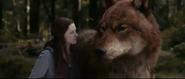 Jacob's Wolf