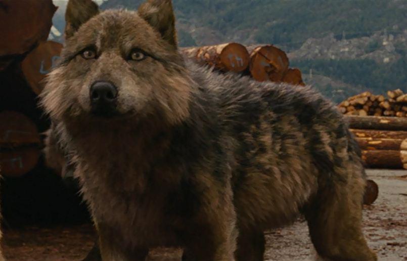 Seth s wolf form