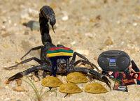 Scorpion god