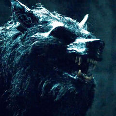 A Werewolf in <i>Rise of the Lycans</i>