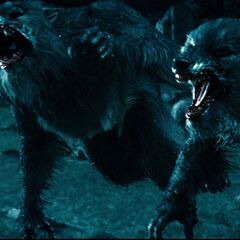 Werewolves in <i>Rise of the Lycans.</i>