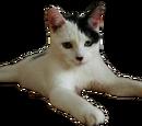 ฮิตเลอร์เป็นแมว