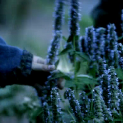 Rebekah touches vervain