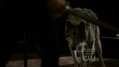 File:Werewolf-and-the-vampire-diaries-gallery.png