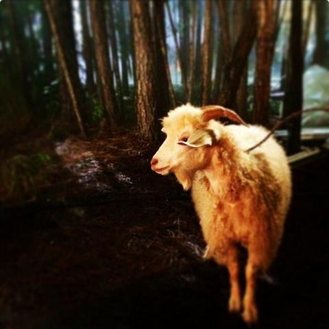 File:The Originals - sheep.png
