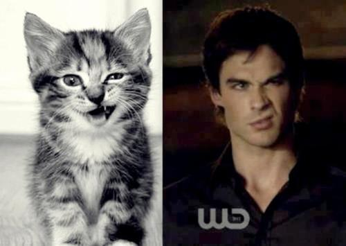 File:5281-the-vampire-diaries-comparison-between-damon-and-a-cat.jpg