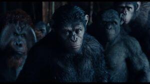 Planet der Affen - Revolution - Trailer