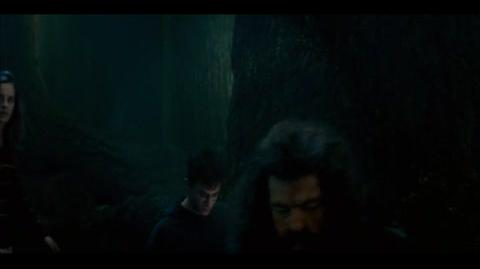 Harry Potter and the Order of the Phoenix - Meeting Grawp
