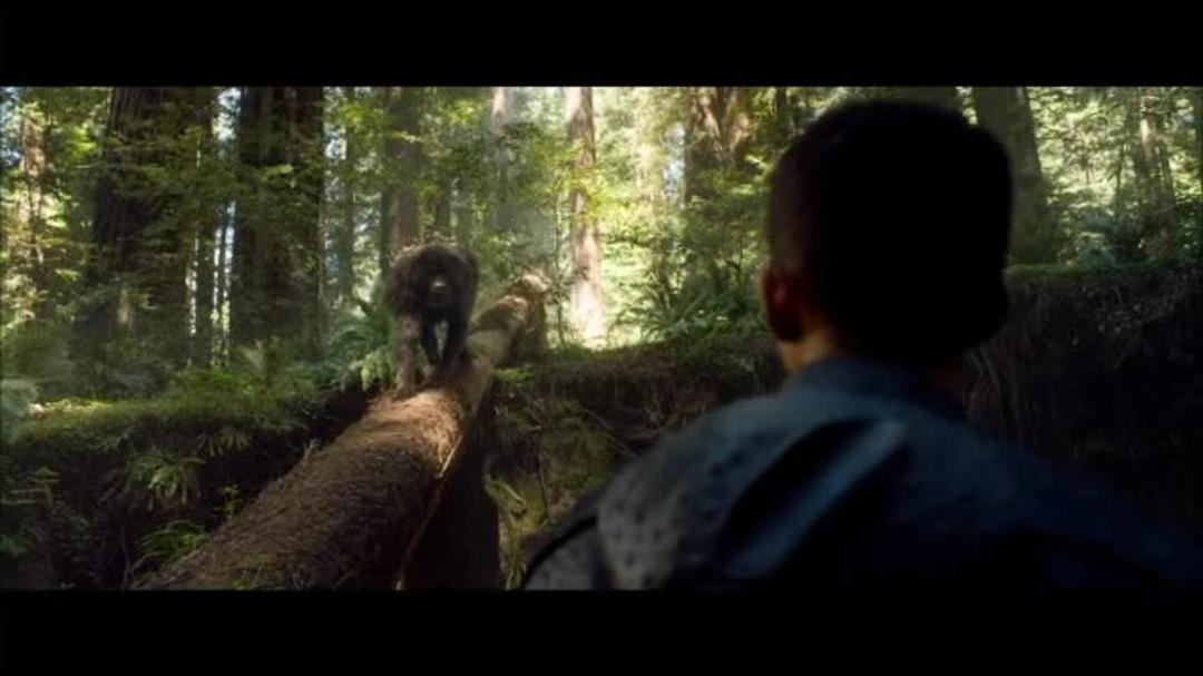 After Earth Clip - Bird Fight