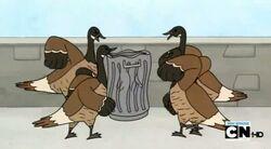 Regular show-a bunch of full grown geese 0017