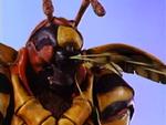 Grumble Bee's Poisonous Venom